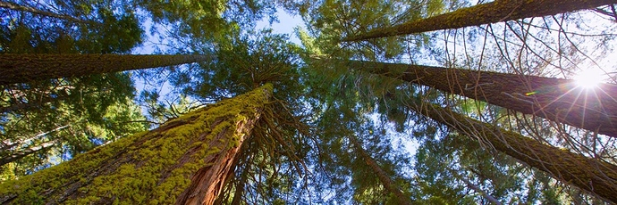 redwoods-and-sequoias-page-banner-desktop