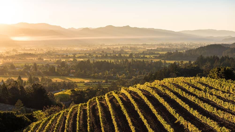 napa-valley-vineyard-san-francisco-1600x900